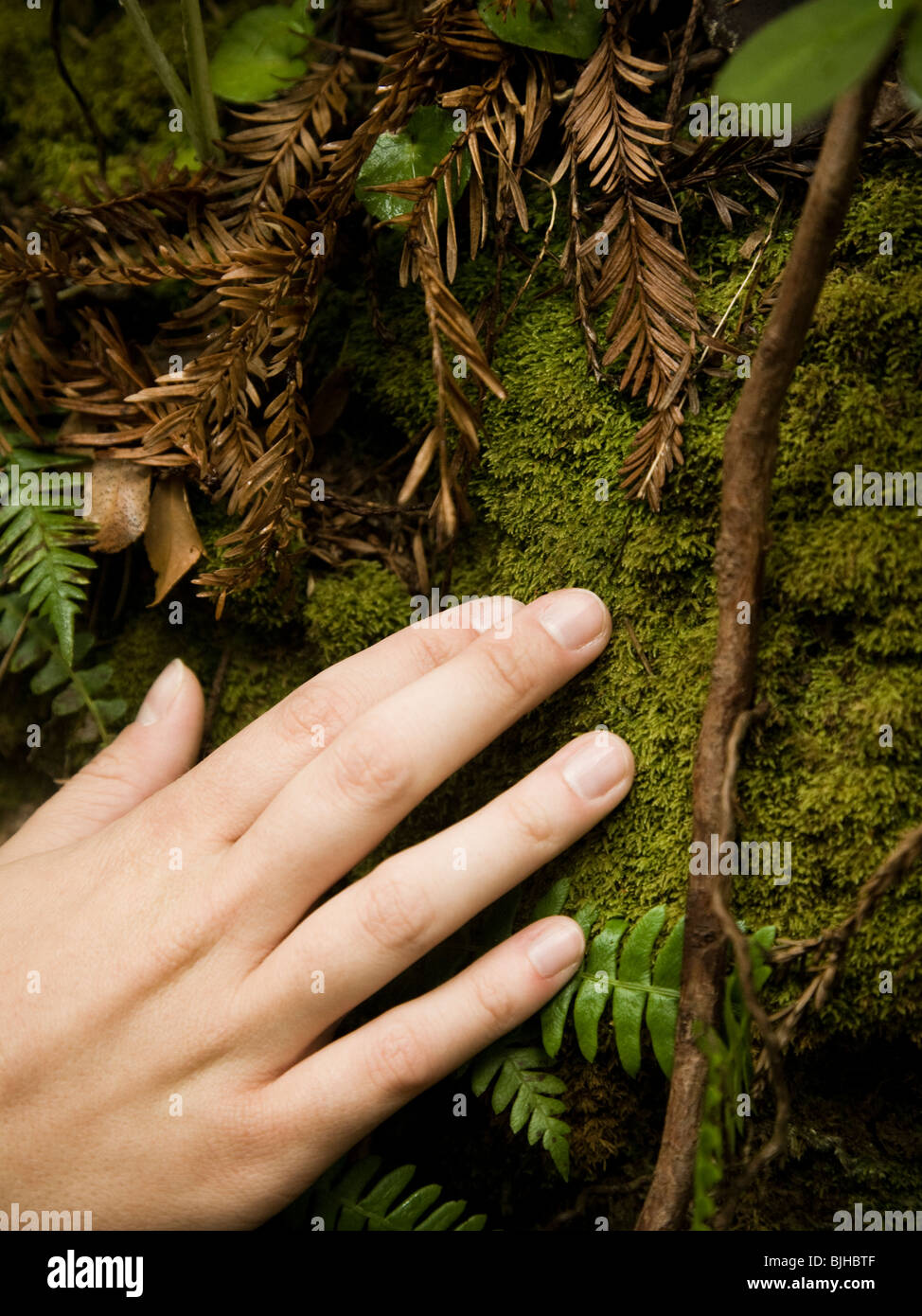 hand touching a moss covered tree trunk - Stock Image