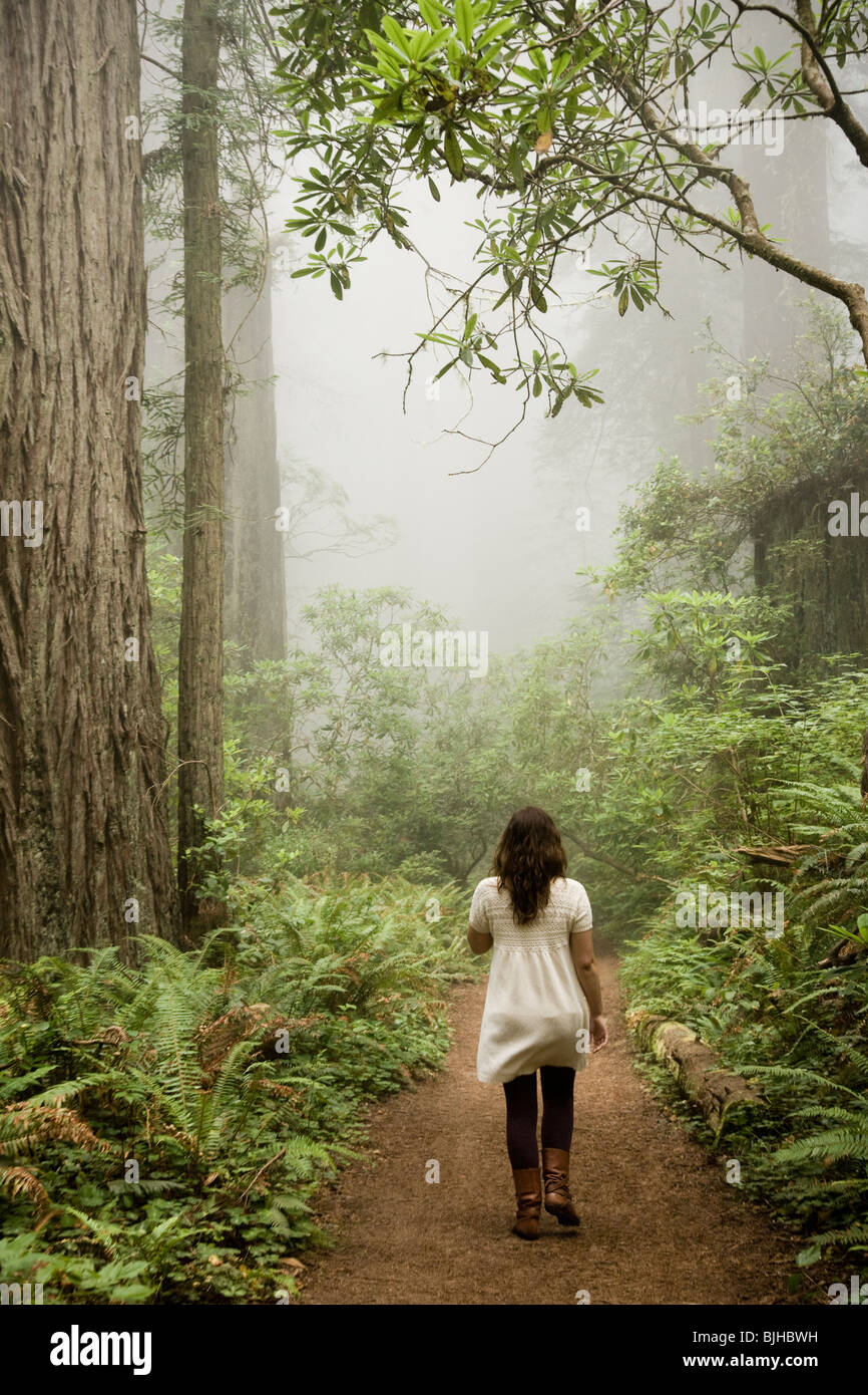 woman walking through a forest of giant redwoods Stock Photo