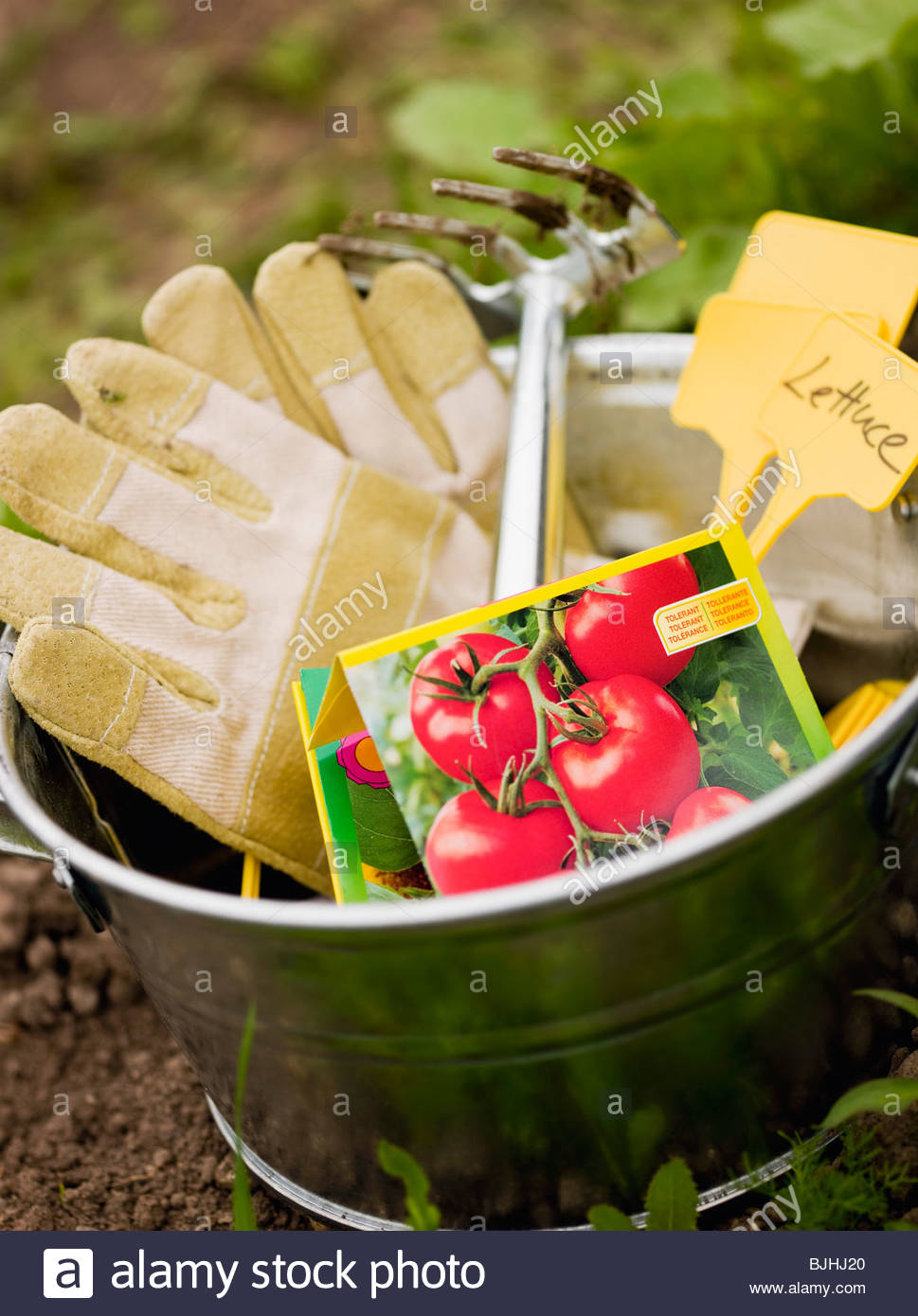 Garden tool, tomato seeds and labels in metal bucket - Stock Image