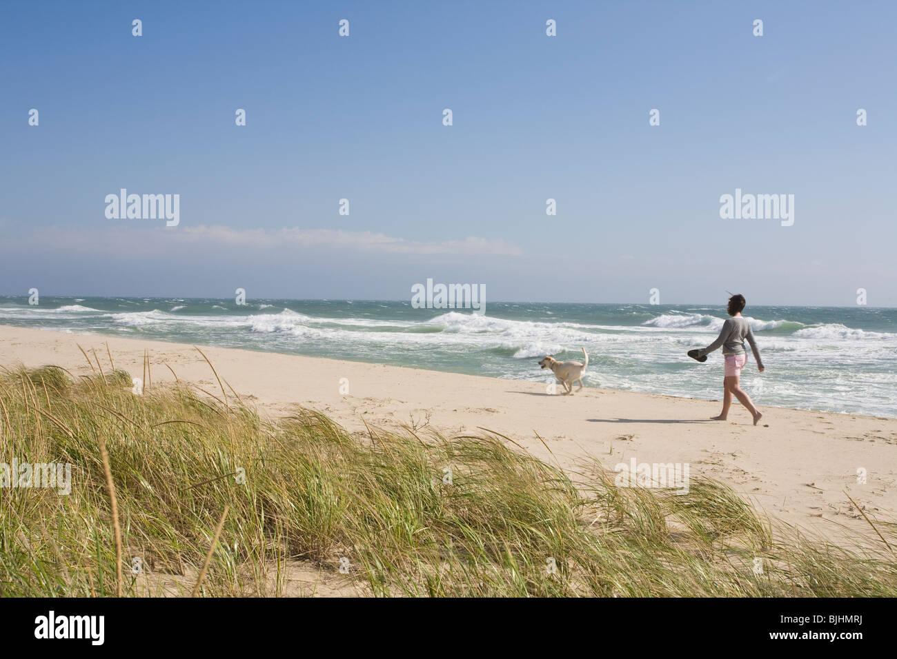 Walking dog on the beach - Stock Image