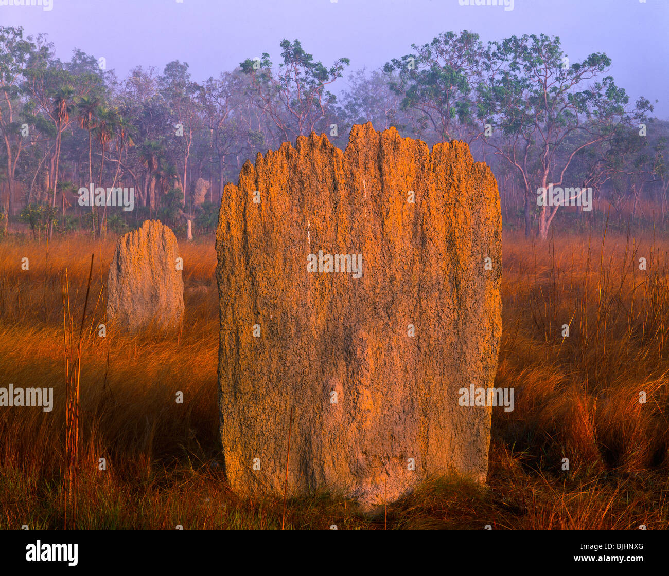 Magnetic anthills in morning fog, Litchfield National Park, Australia, top end of Northern Territory, anthill, Magnetic - Stock Image