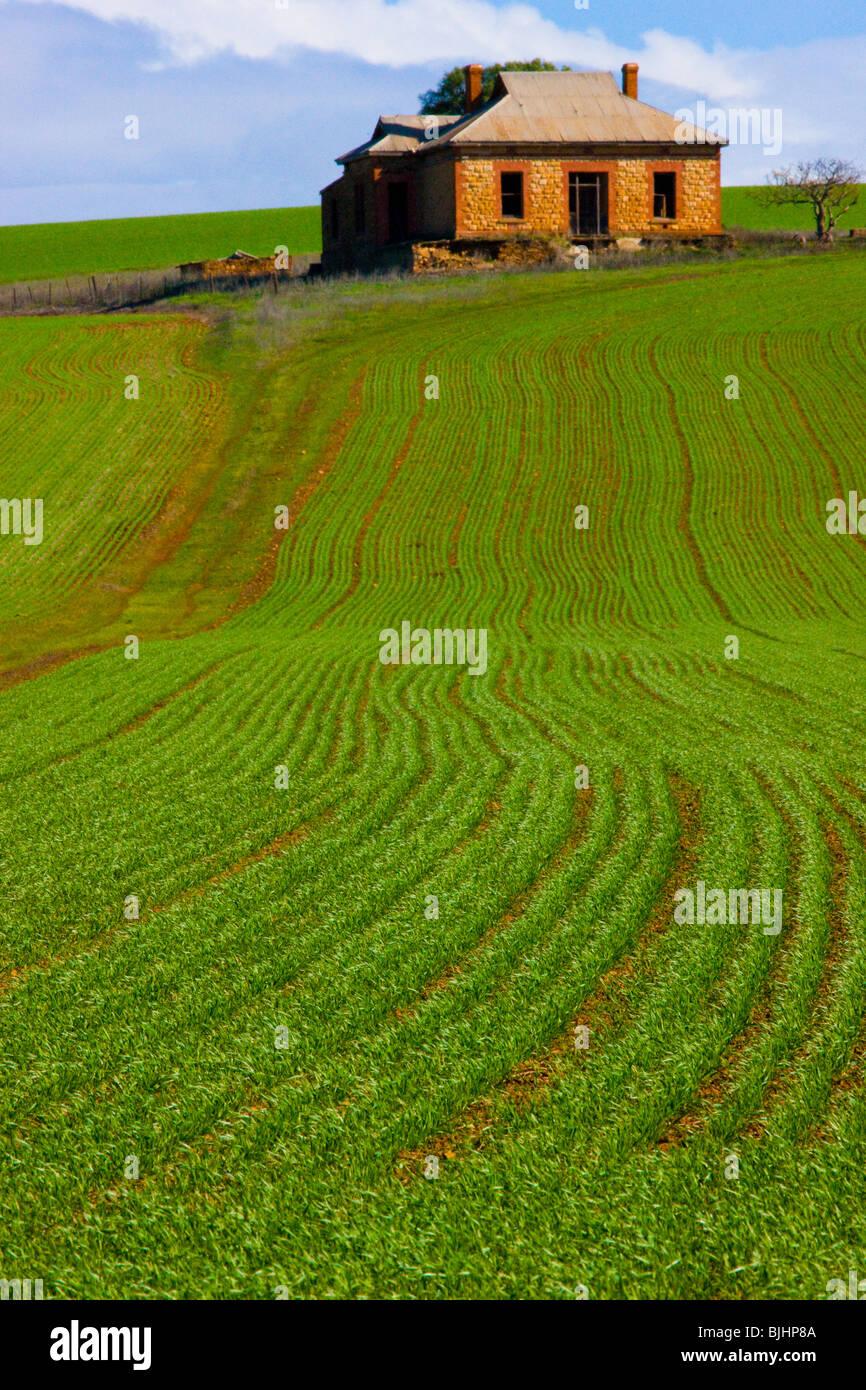 Abdandoned farmstead and field, South Australia, Australia, near Burra - Stock Image
