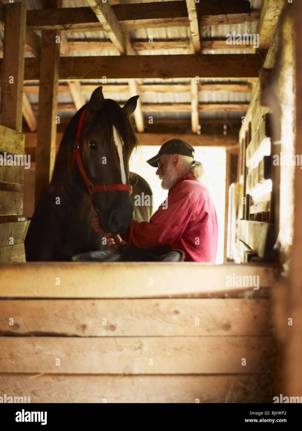 Man and horse in stable - Stock Image