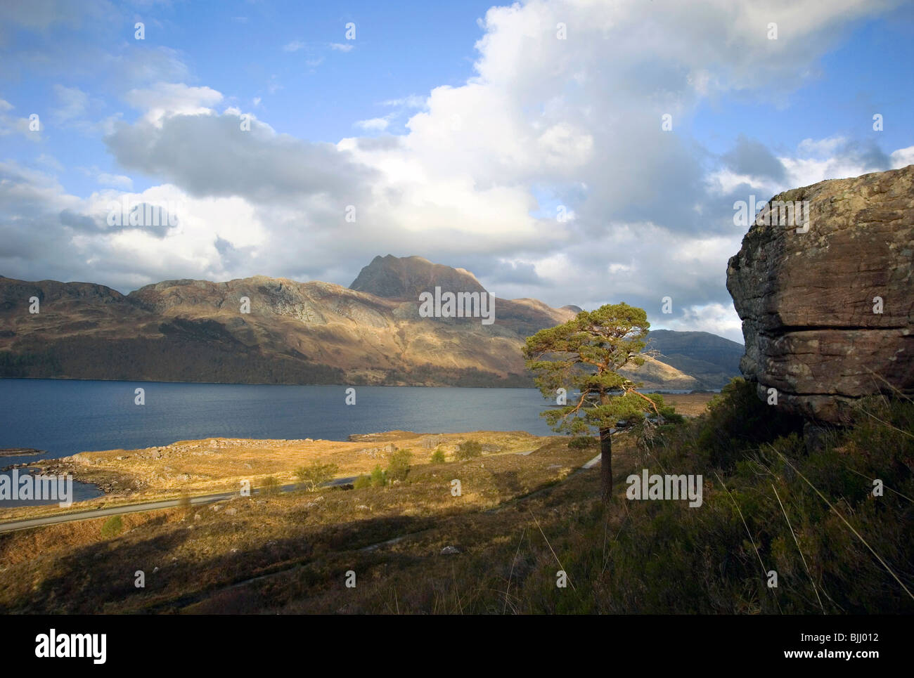 rocky outcrop and scots pine with view of Slioch mountain Torridon and Ben Eighe nature reserve - Stock Image