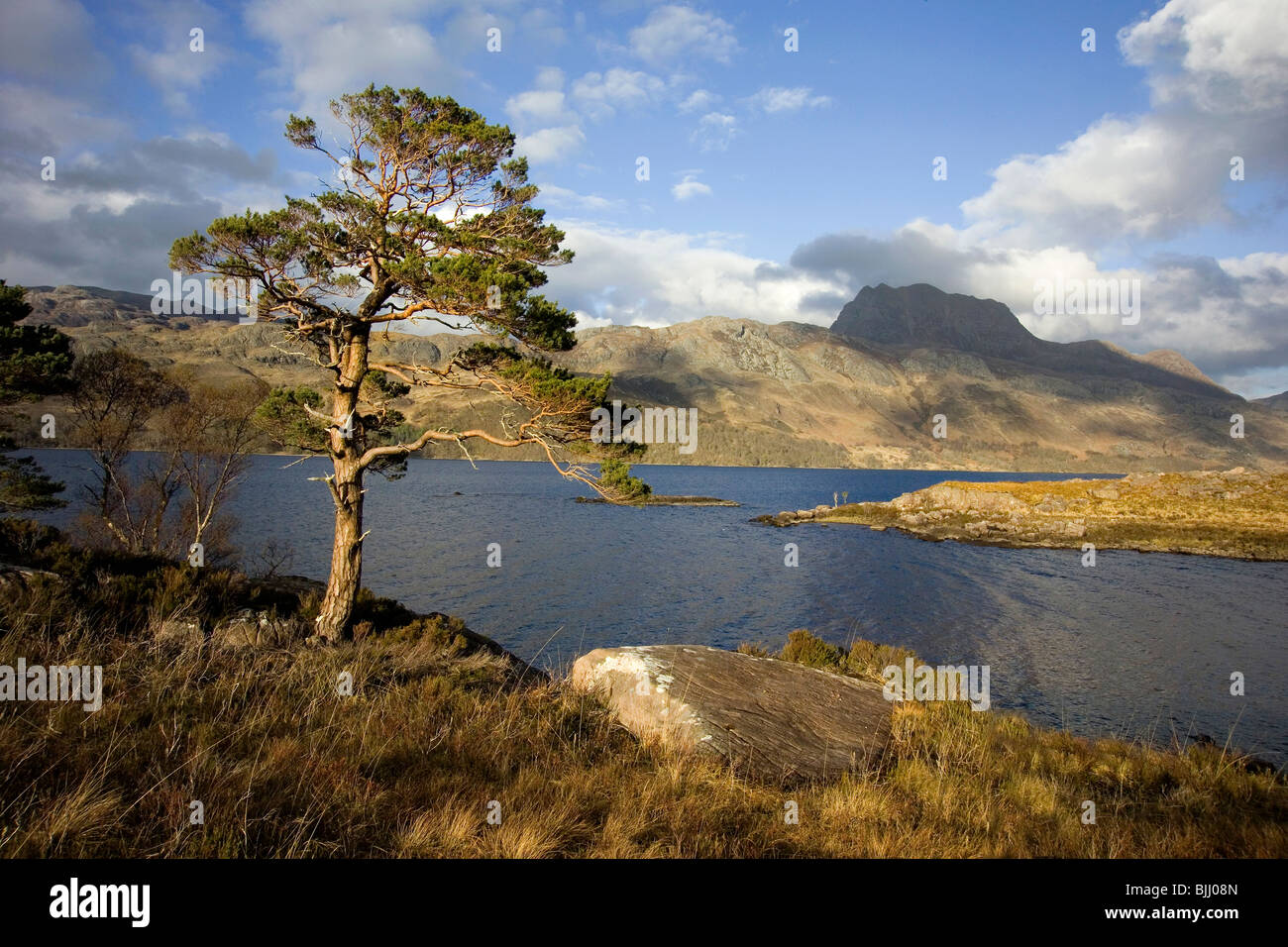 Scots Pine on shores of Loch Maree with Slioch Mountain in distance - Stock Image
