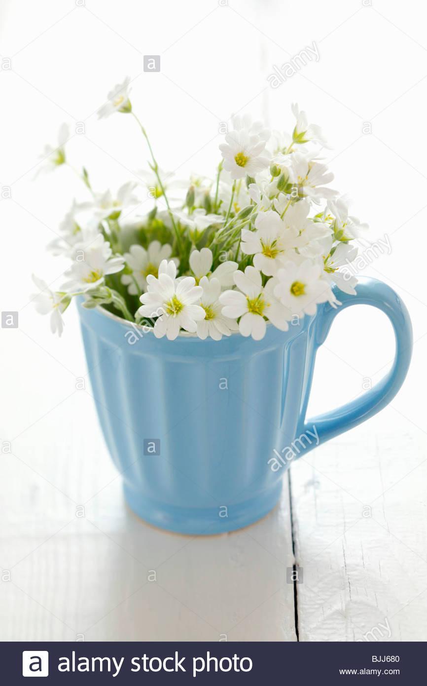 White Porcelain With Blue Flowers Stock Photos White Porcelain