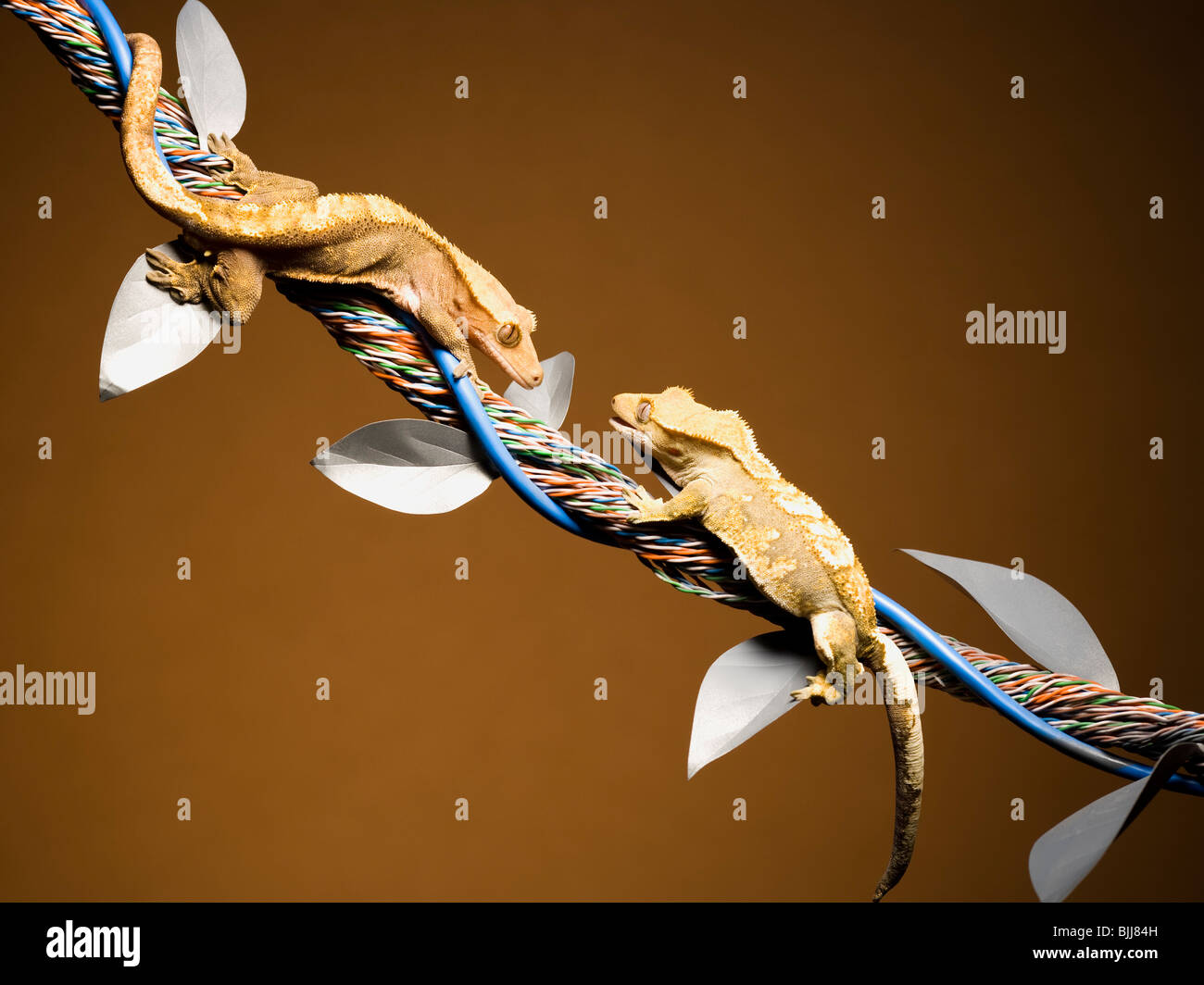Two lizards on cable with leaves Stock Photo