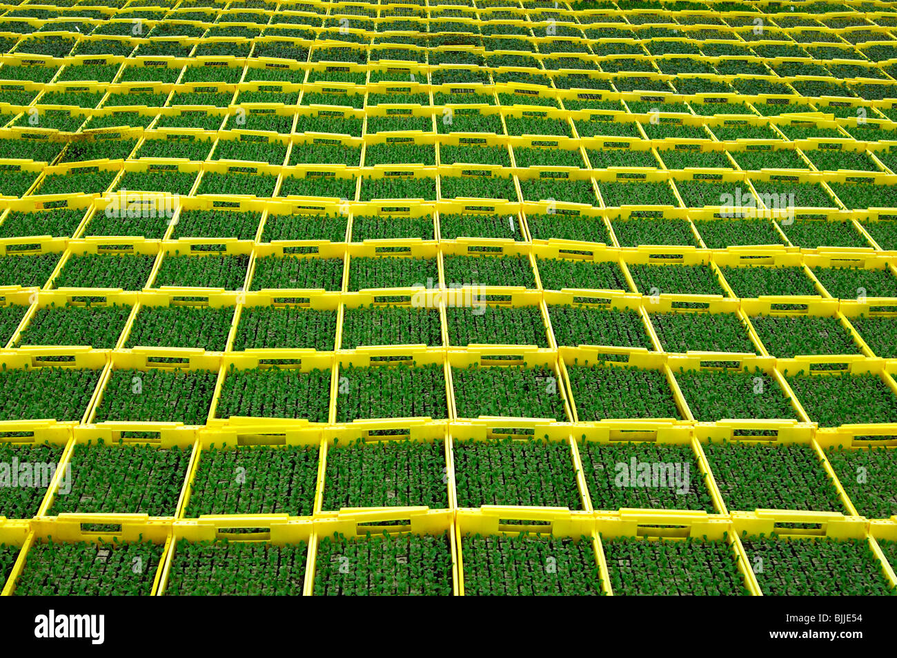 Seedlings in planters in a hothouse of a nursery - Stock Image
