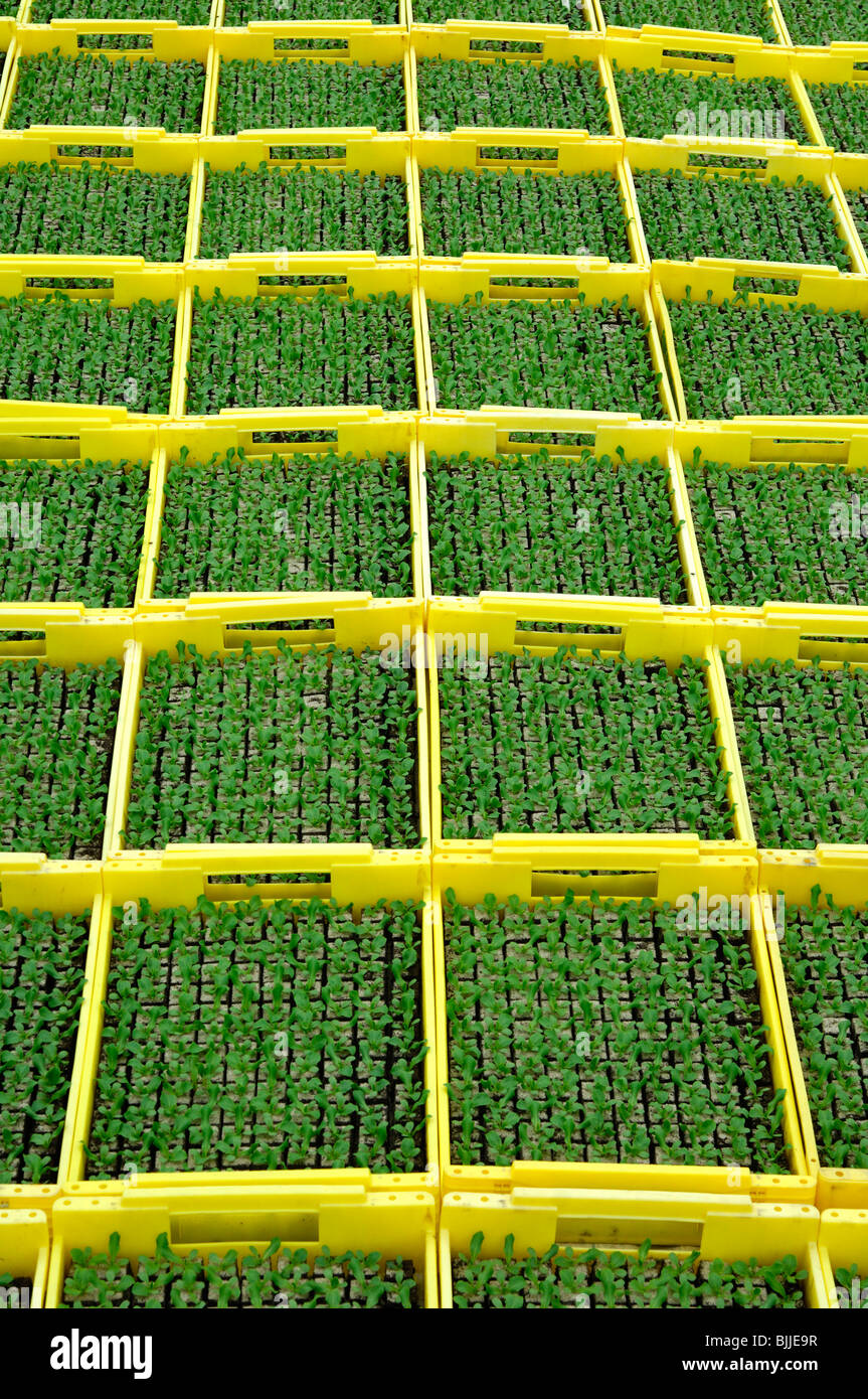 Seedlings in planters in a hothouse of a nursery Stock Photo