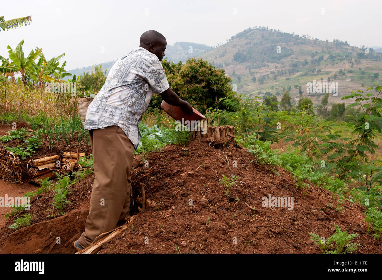 Farmer adding dirty water to keyhole garden growing onions and Stock ...
