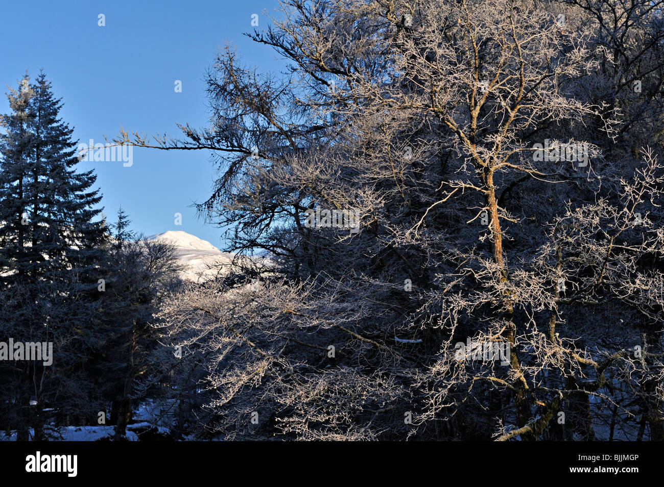 Frosted branches outlined against blue winter sky and snow-clad mountains near Killin, Perthshire, Scotland, UK - Stock Image