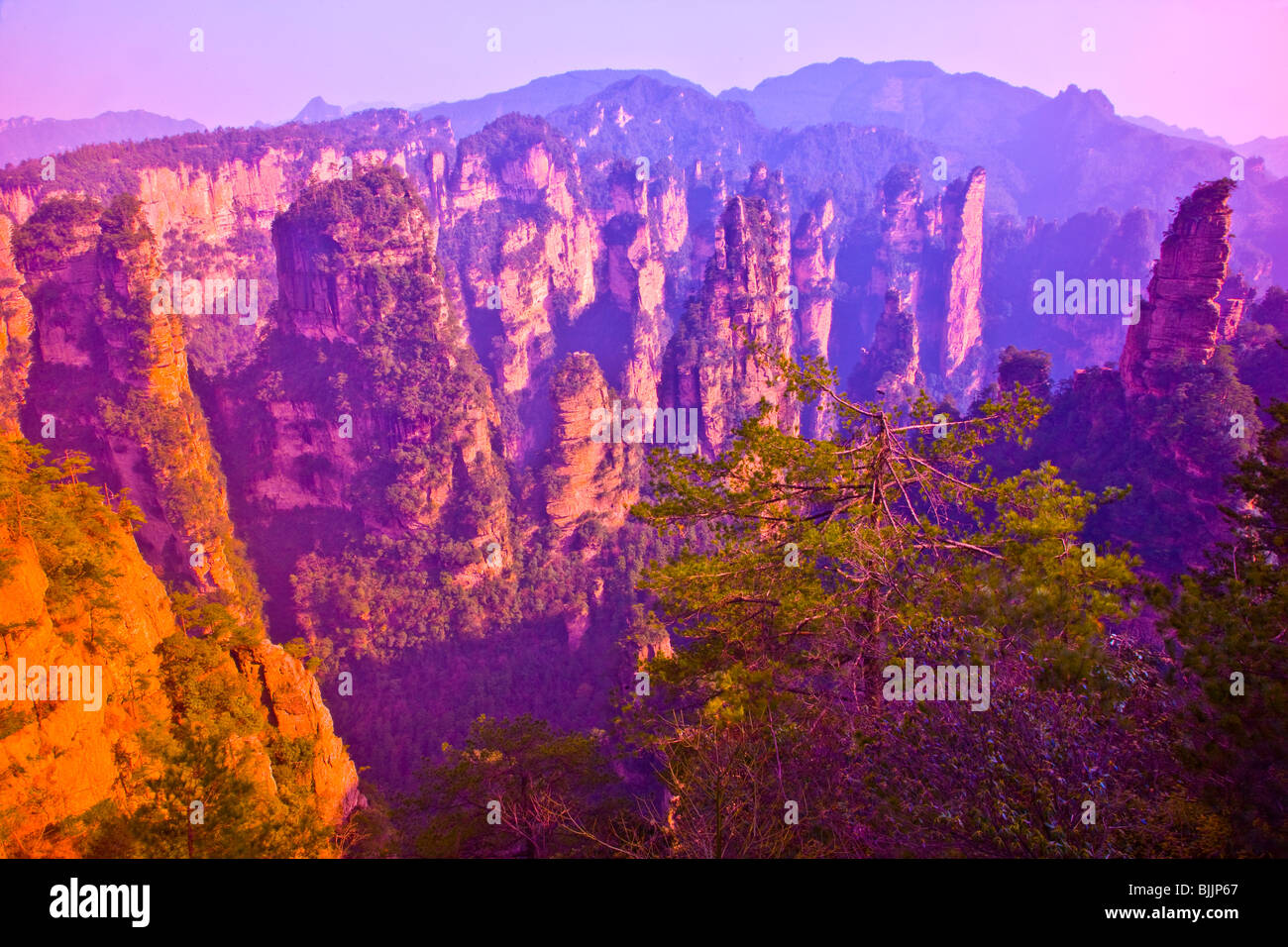The Front Garden, rock pinnacles in Zhangjiajie National Forest Park, People's Republic of China, Wulingyuan - Stock Image