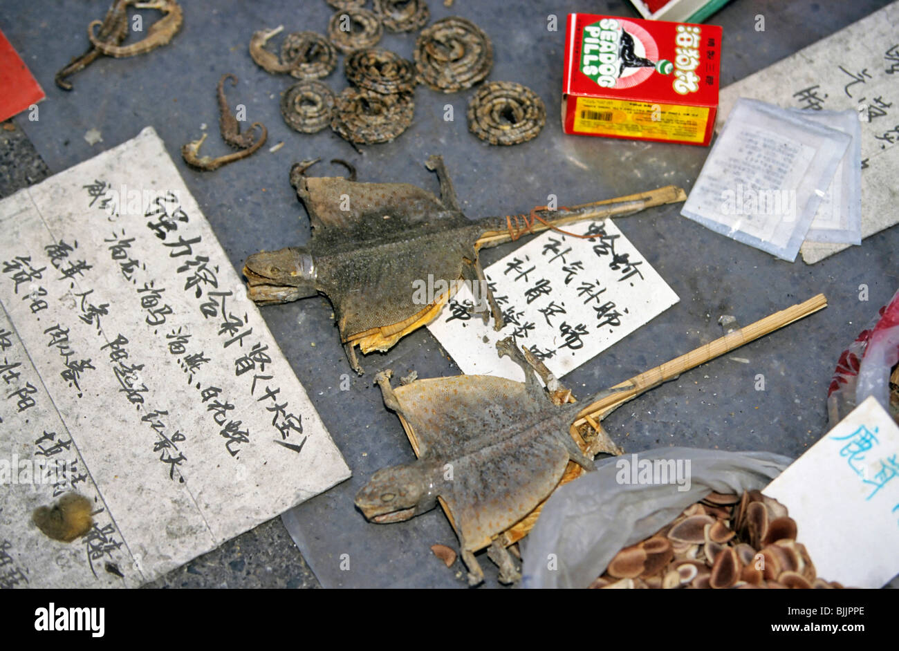 Reptiles as a traditional cure on a market in Beijing, China, Asia - Stock Image