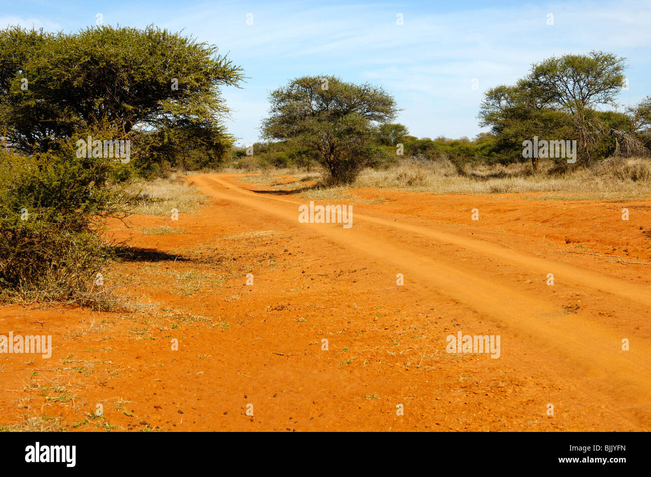 Red-brown laterite earth with typical bush landscape and nature trail in the Madikwe Game Reserve, South Africa, Stock Photo
