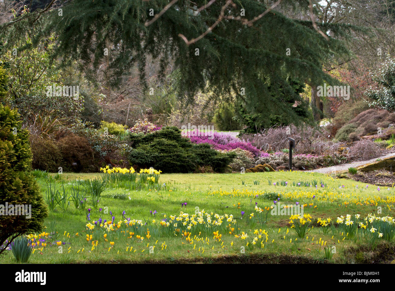 Landscaped area of Ness Gardens, with profusion of spring flowers - Stock Image