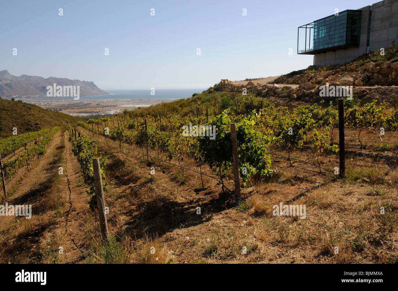 Vineyard of the Waterkloof wine estate at Somerset West in the western Cape South Africa Slope down toward the Atlantic - Stock Image