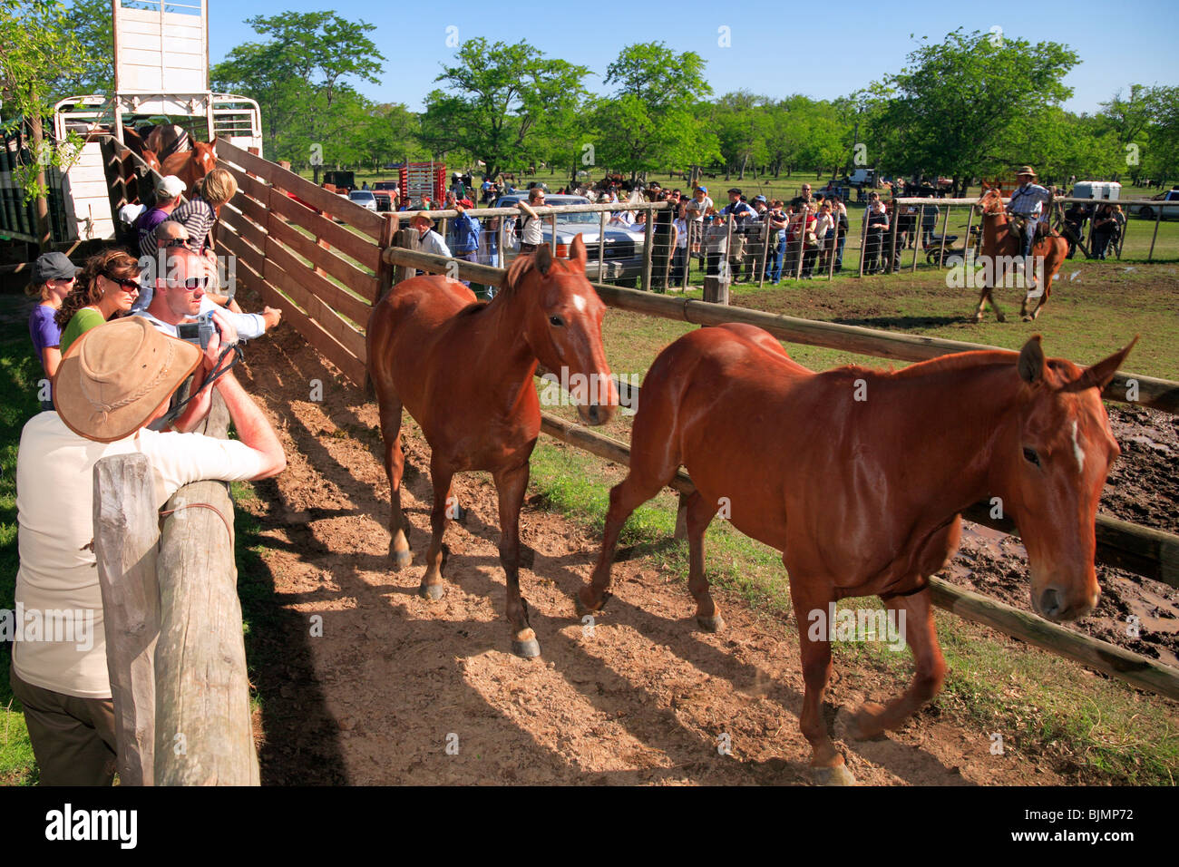 savage horses at field, at san antonio de Areco, Buenos Aires, Argentina - Stock Image