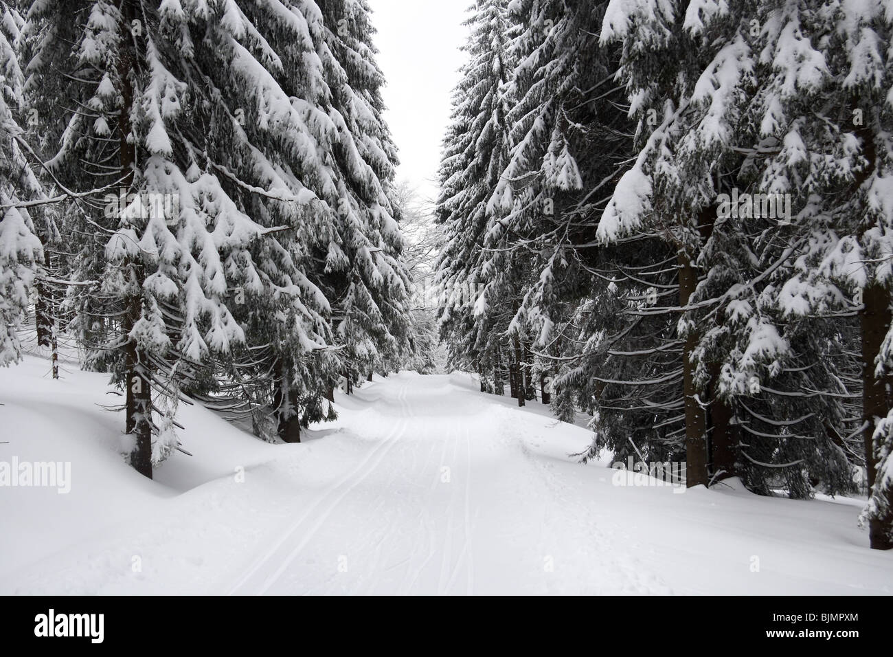Cross country ski trail, Jakuszyce, Poland. - Stock Image