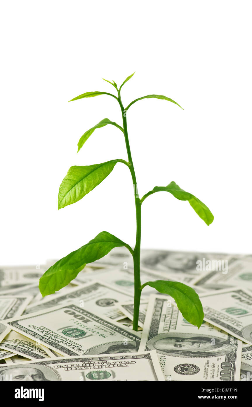 plant in dollars heap isolated - Stock Image