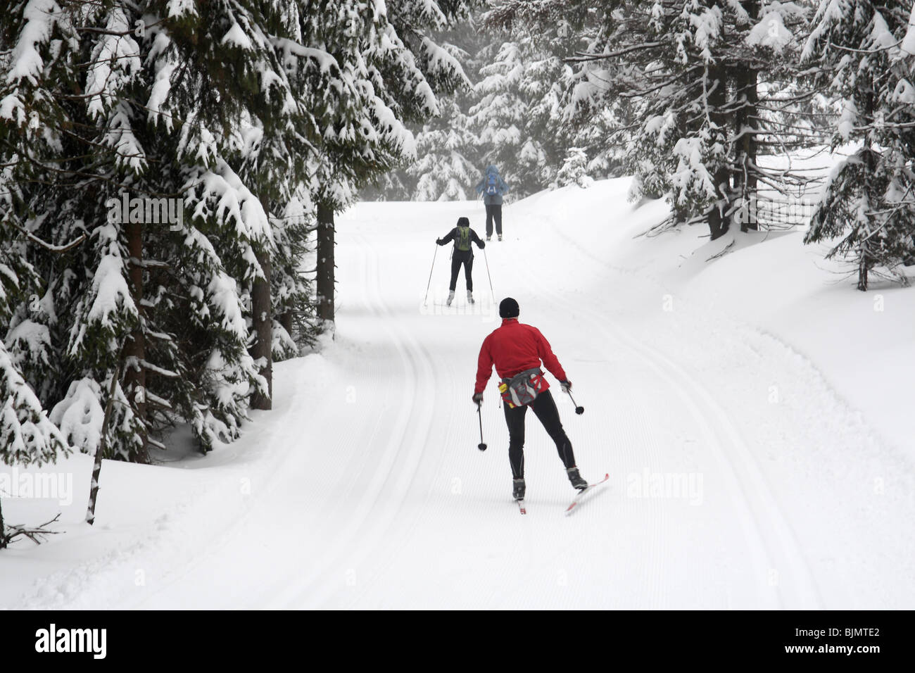 Cross country ski trail in Jakuszyce, Sudety Mountains, Poland. - Stock Image