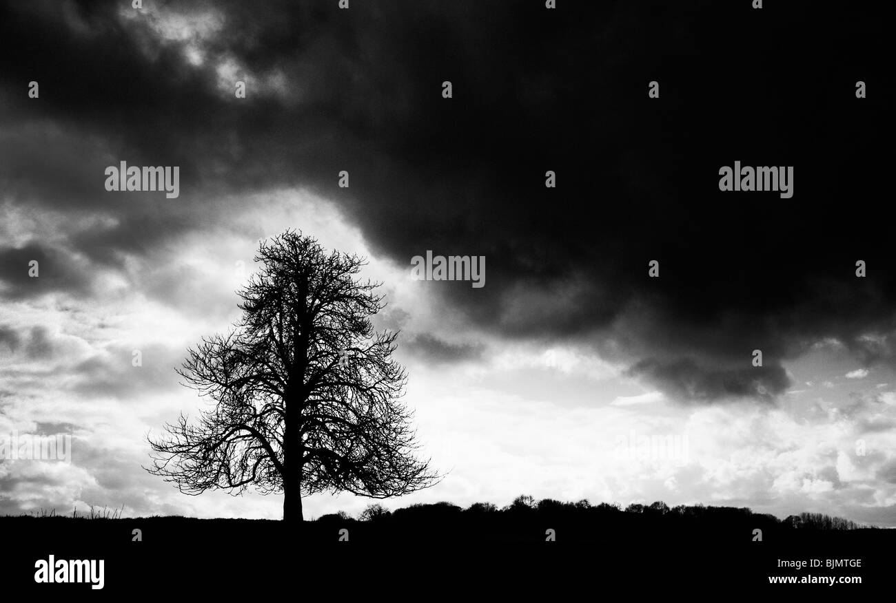 Winter Horse Chestnut Tree and dark skies in the English countryside. UK.  Monochrome silhouette - Stock Image