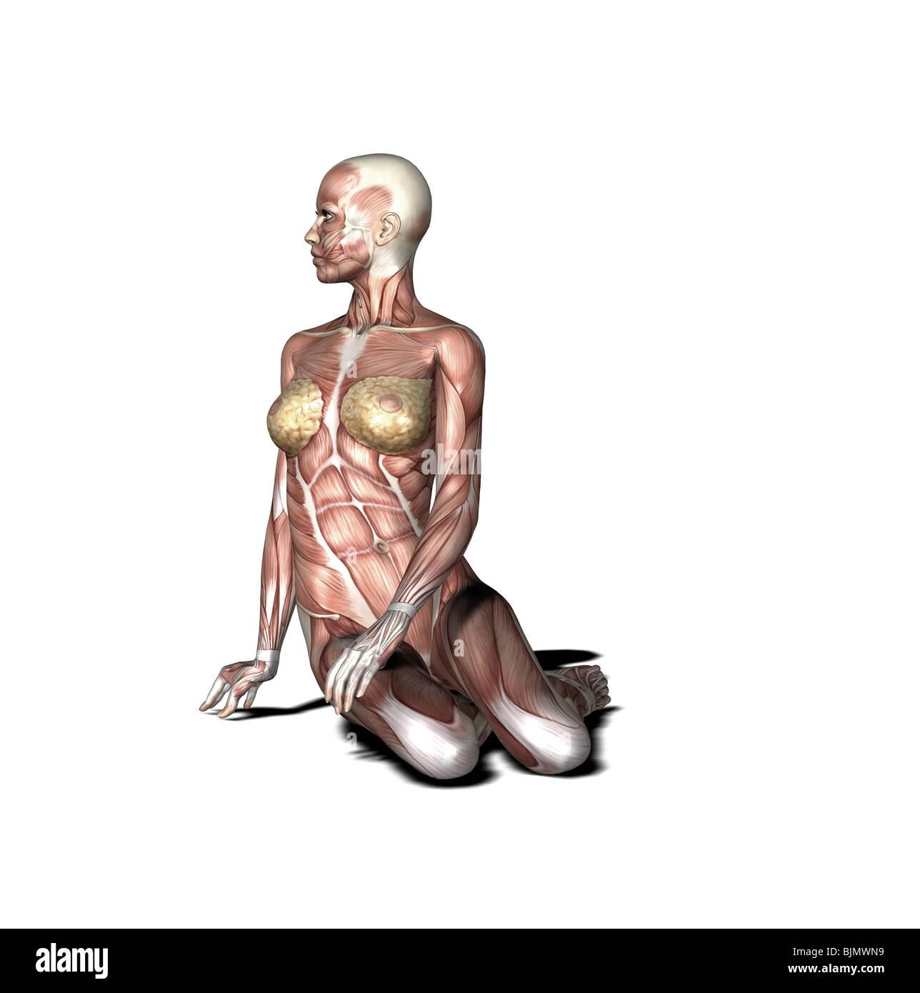 yoga practice Bharadvajas Twist - Stock Image