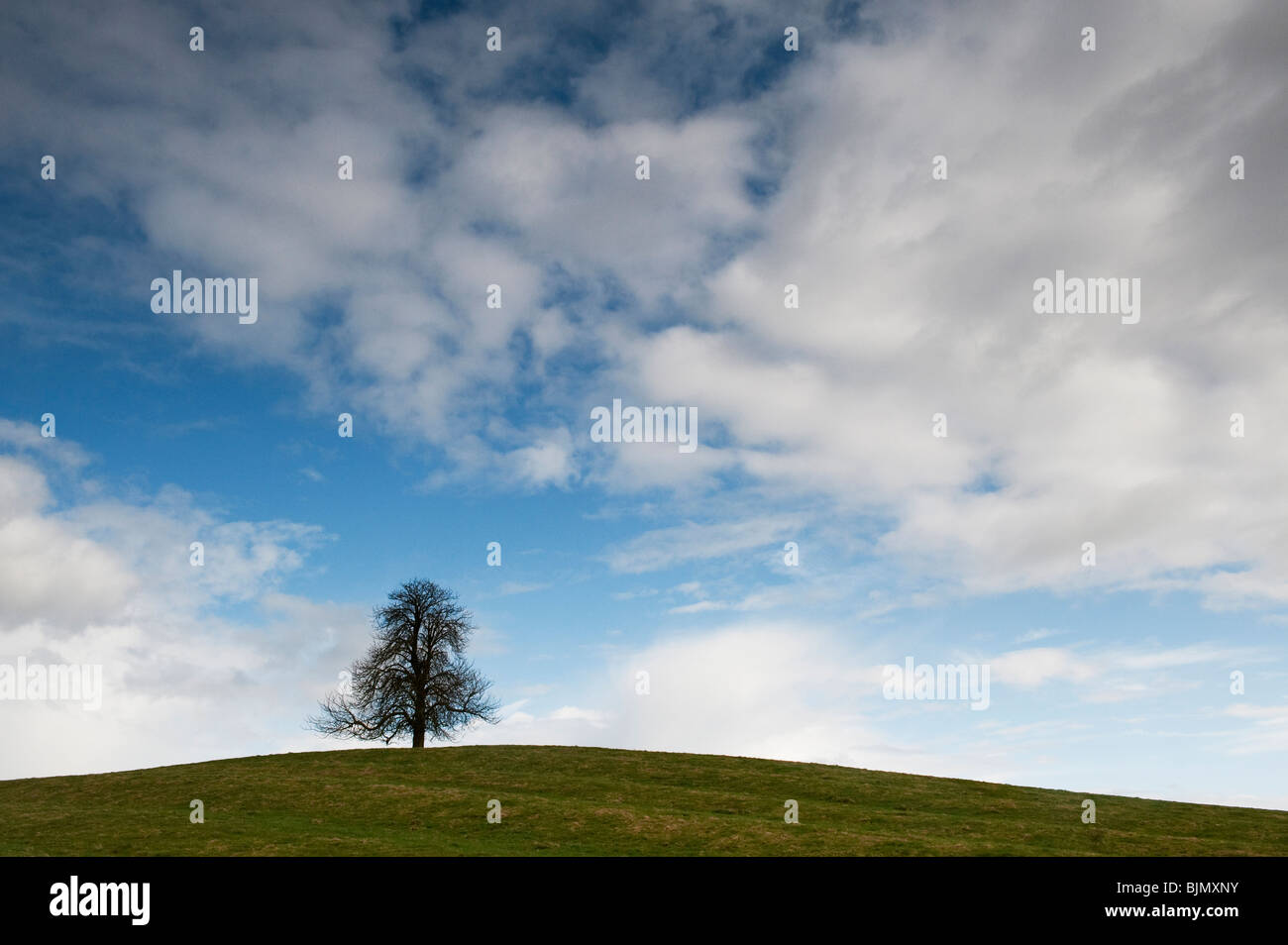 Winter Horse Chestnut Tree in the English countryside. UK - Stock Image