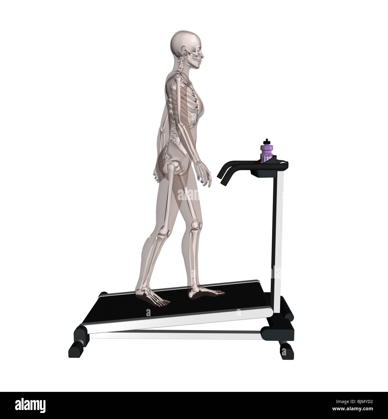 muscle woman with visible skeleton as runner - Stock Image