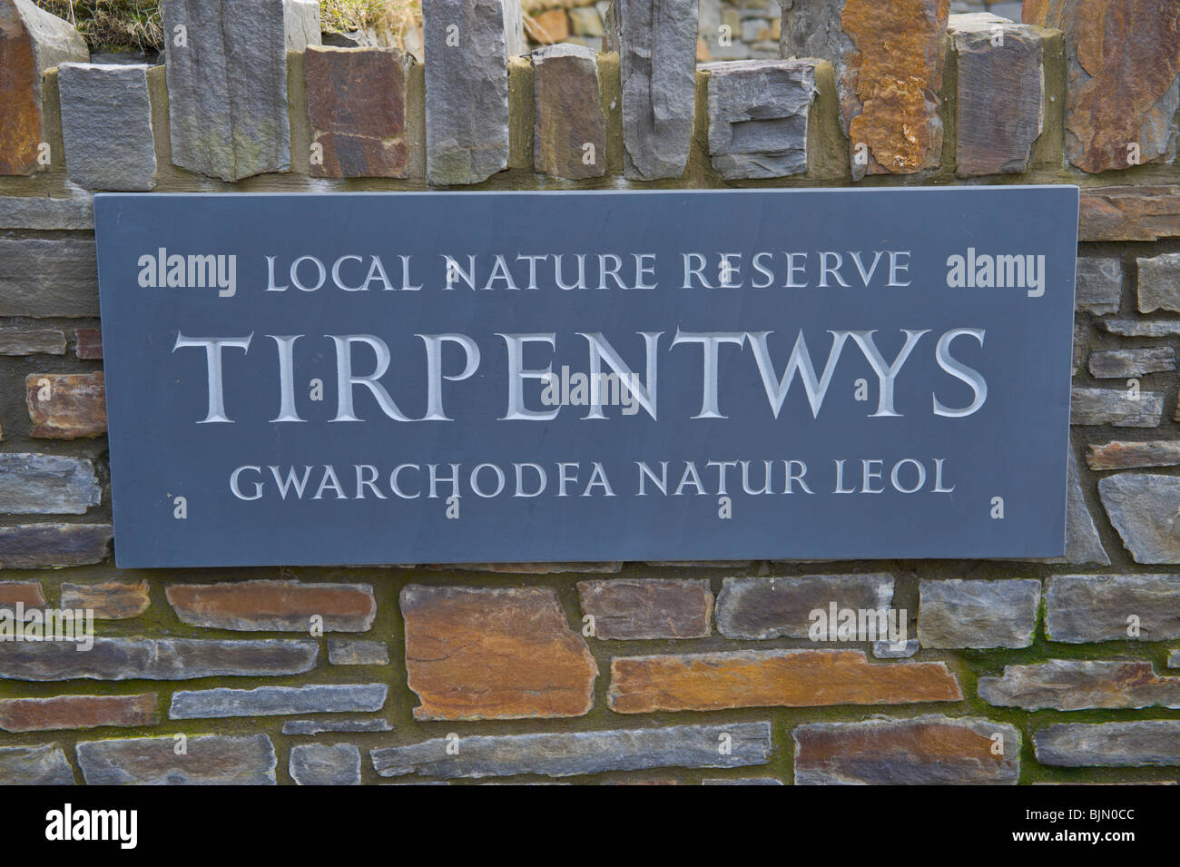 Tirpentwys Local Nature Reserve on reclaimed colliery and landfill site at Cwmffrwdoer near Pontypool Torfaen South - Stock Image
