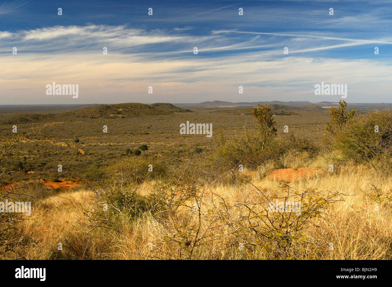 View across the vast African savanna landscape of the Madikwe Game Reserve, South Africa - Stock Image