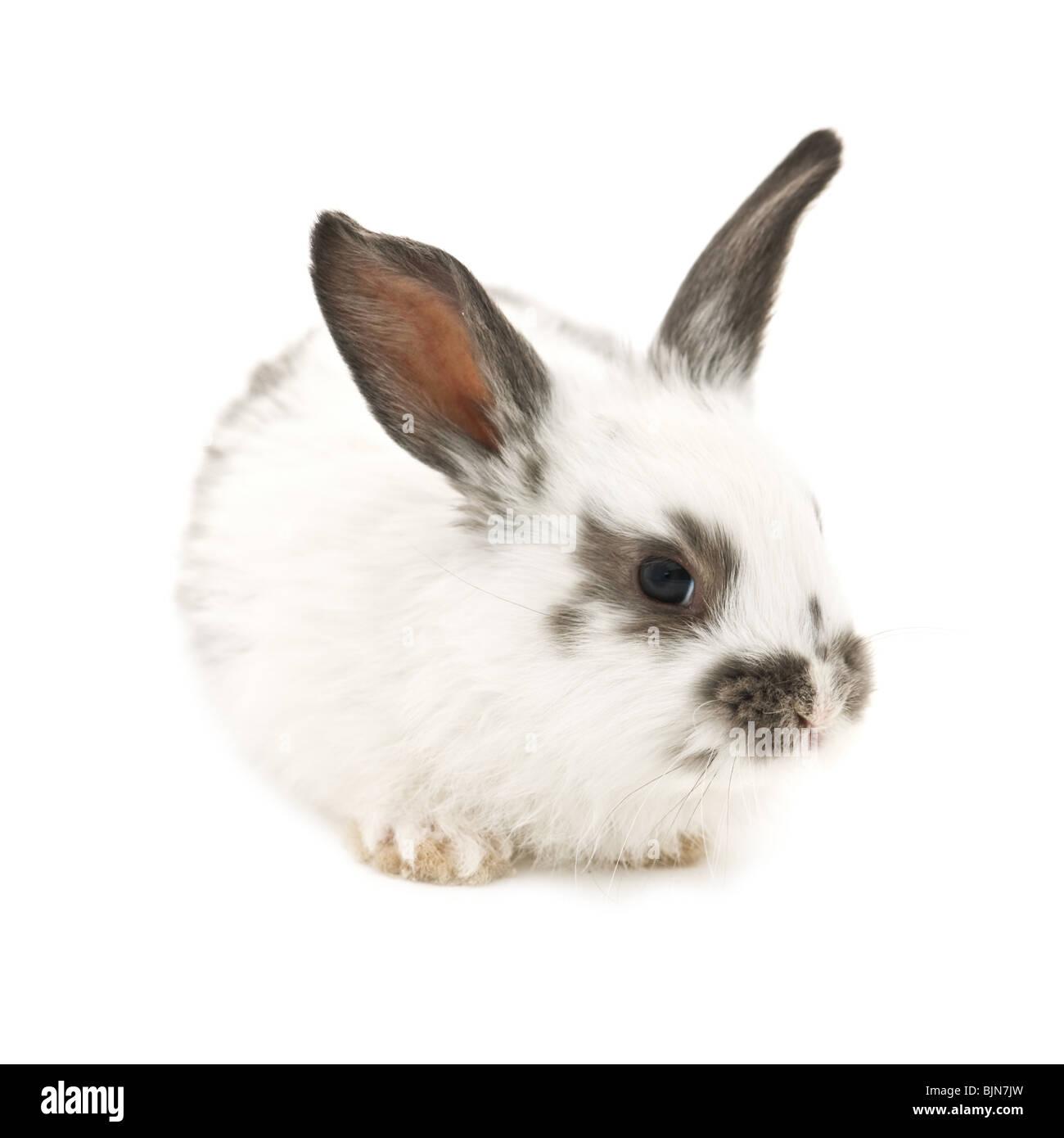 rabbit isolated on white background - Stock Image