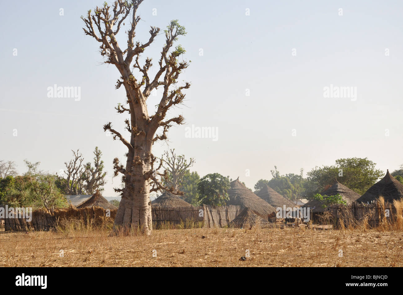 Compounds for extended families in a village in The Gambia - Stock Image