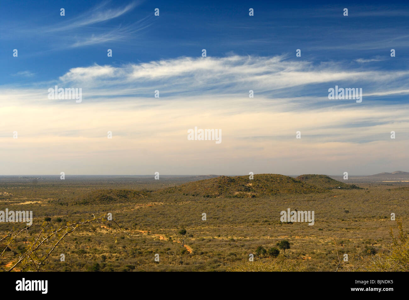 View across the vast African savannah landscape of the Madikwe Game Reserve, South Africa - Stock Image