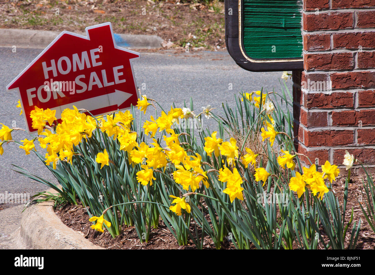 House For Sale sign and daffodils, Spring of 2010 Stock Photo
