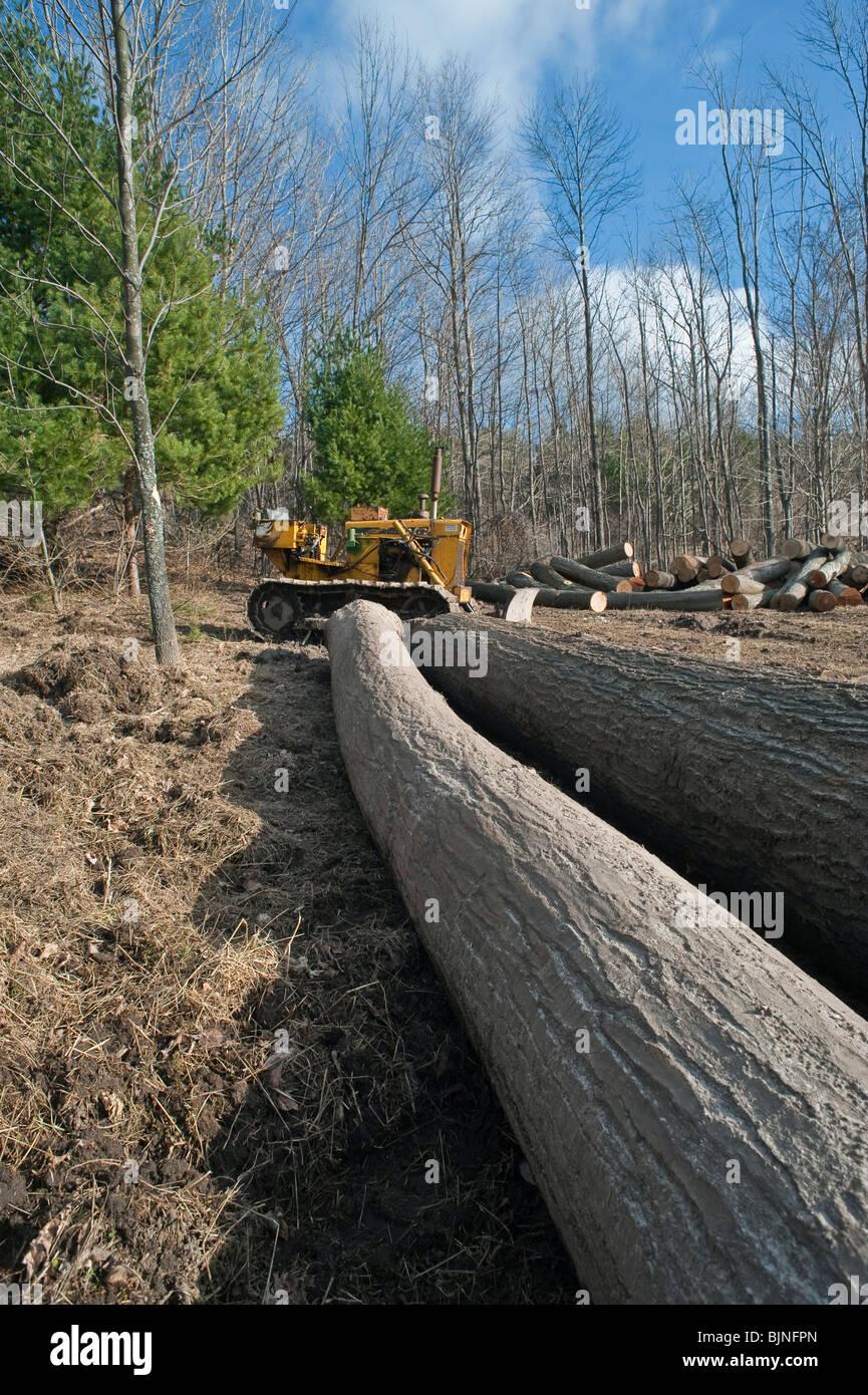 Logging operation Manistee county Michigan USA - Stock Image