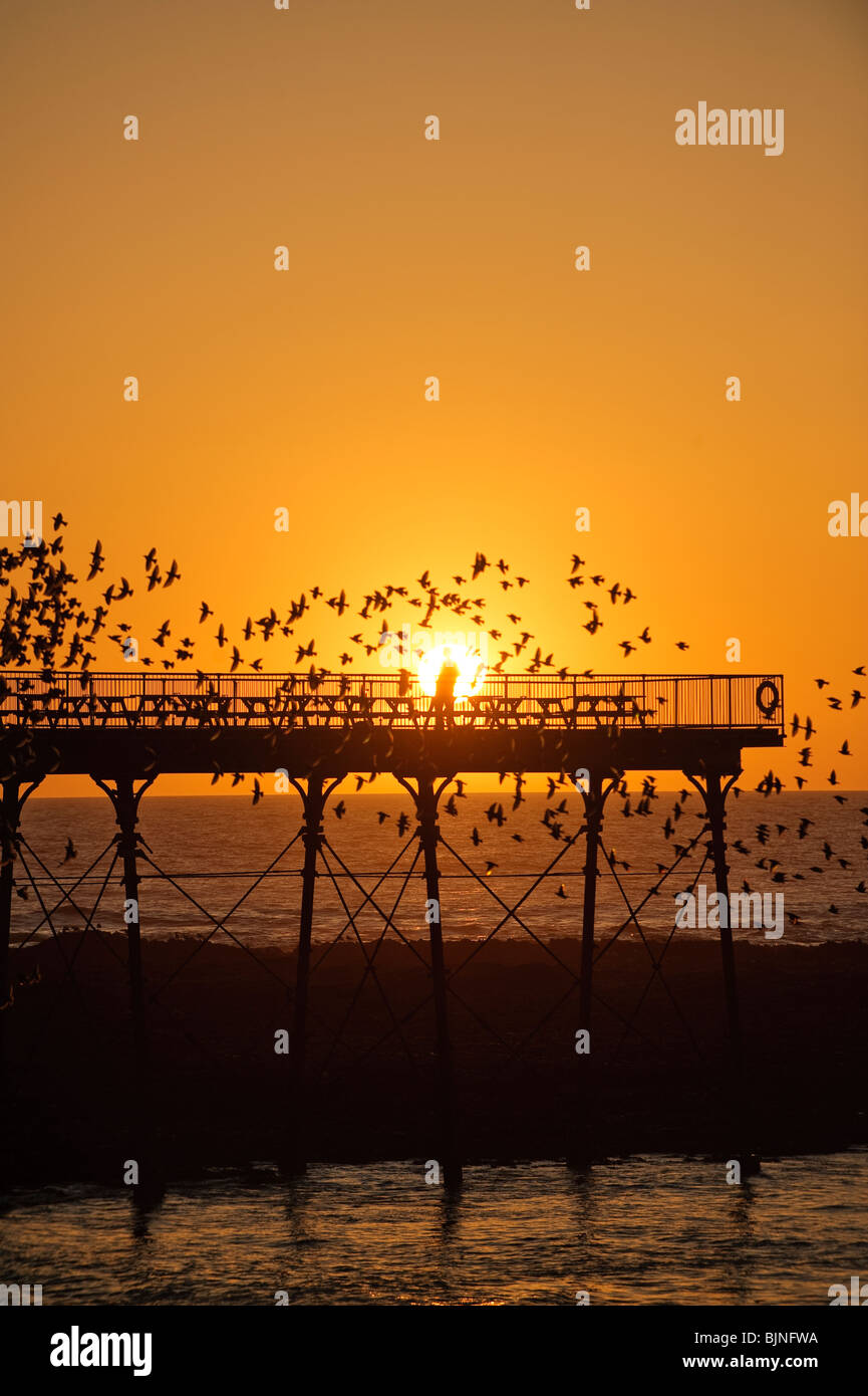 Aberystwyth pier at sunset with starlings roosting, Wales UK - Stock Image