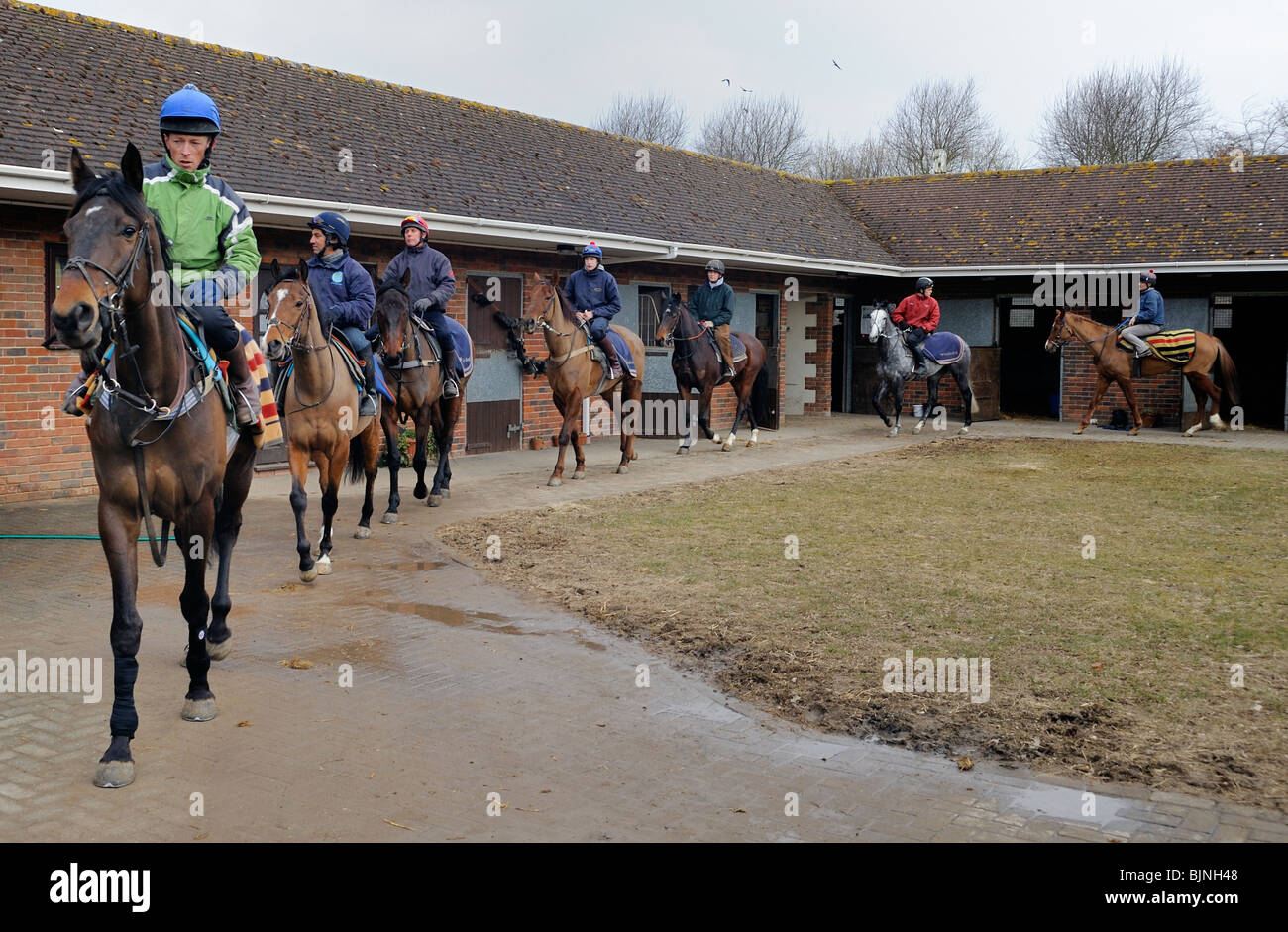 Racehorses leaving the stables to go on a training run - Stock Image