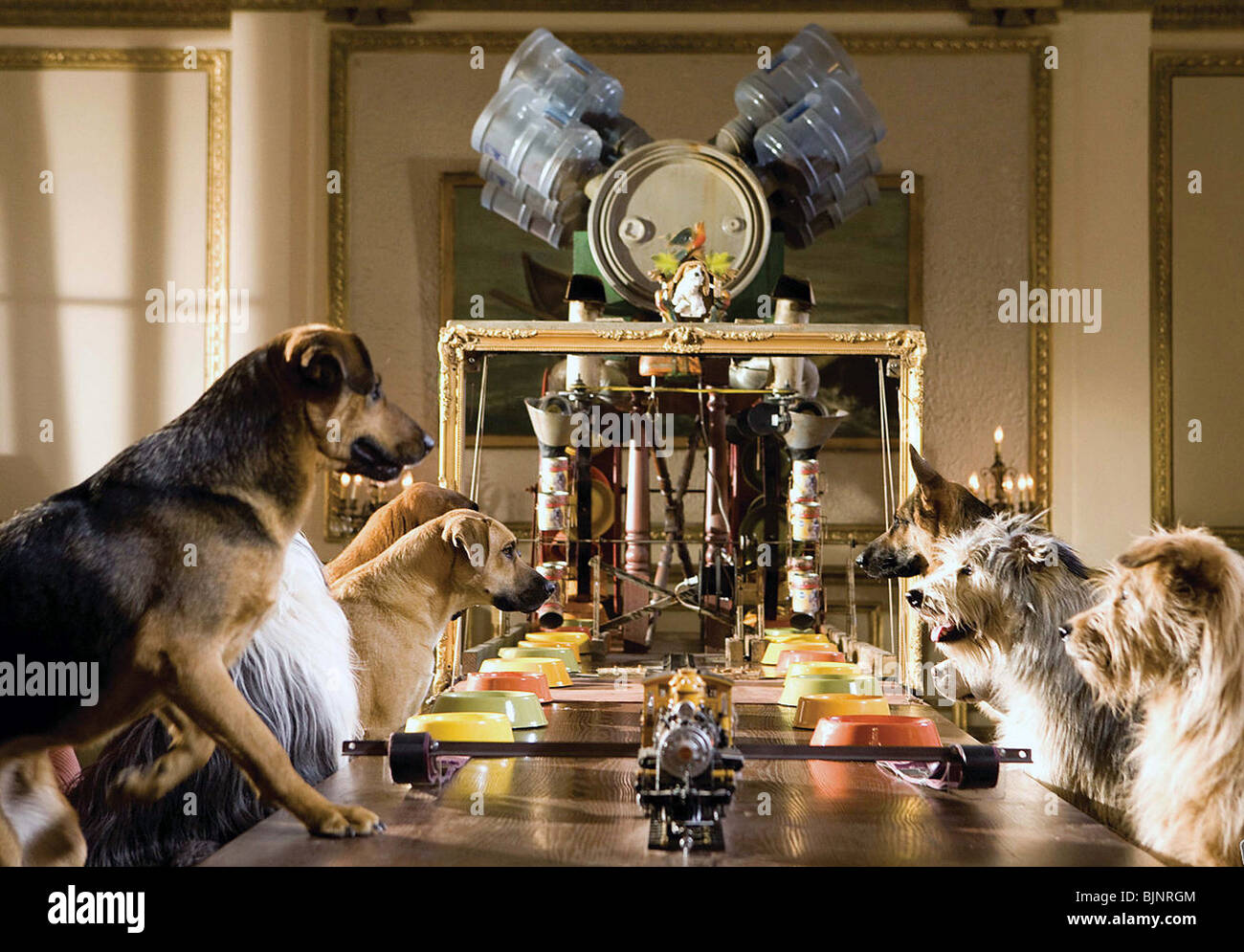 HOTEL FOR DOGS (2009) THOR FREUDENTHAL (DIR) 004 - Stock Image
