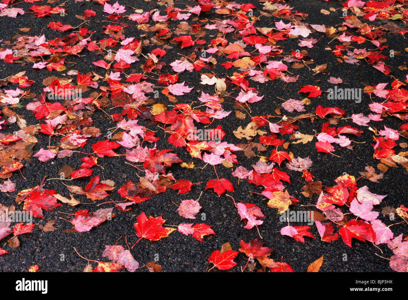 Autumn leaves on a pavement Stock Photo