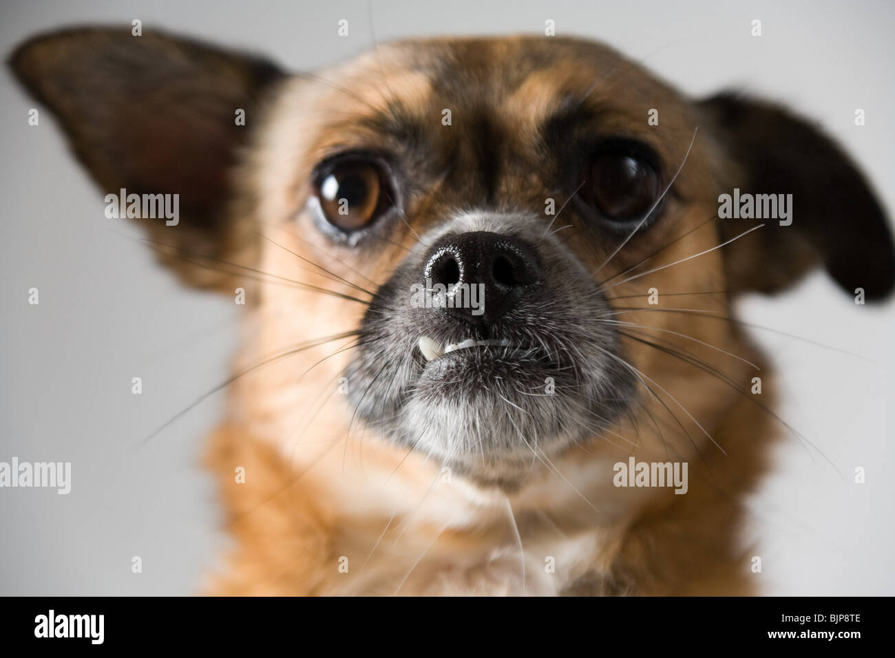 Whisker Anatomy Stock Photos & Whisker Anatomy Stock Images - Alamy