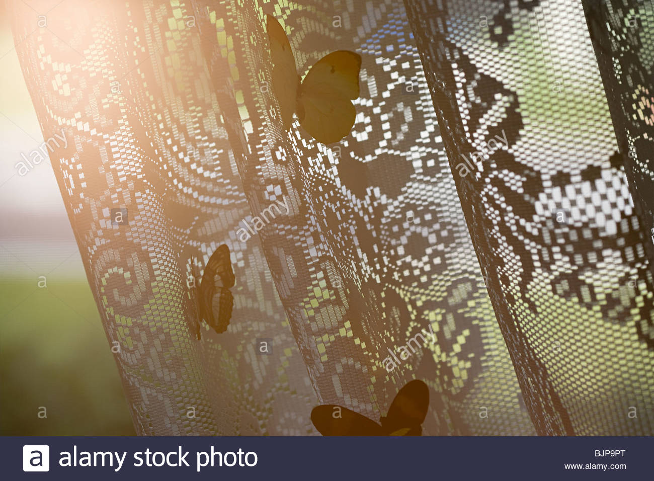 Butterflies on net curtain - Stock Image