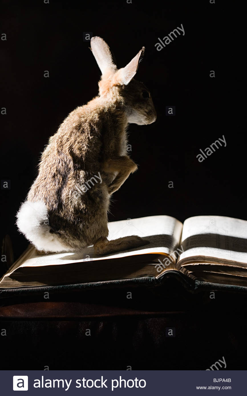 Hare on a book - Stock Image