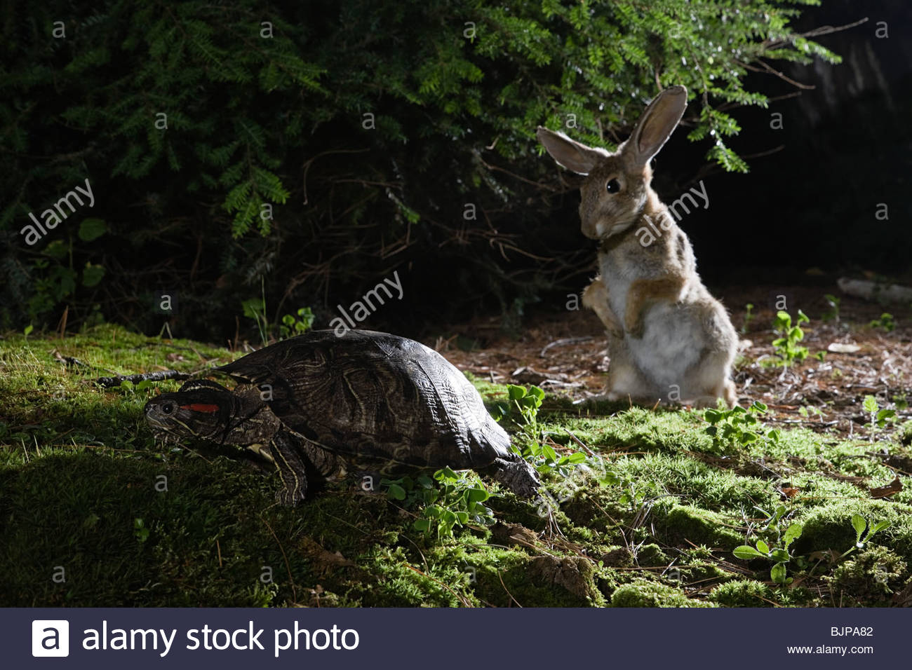Hare and tortoise - Stock Image