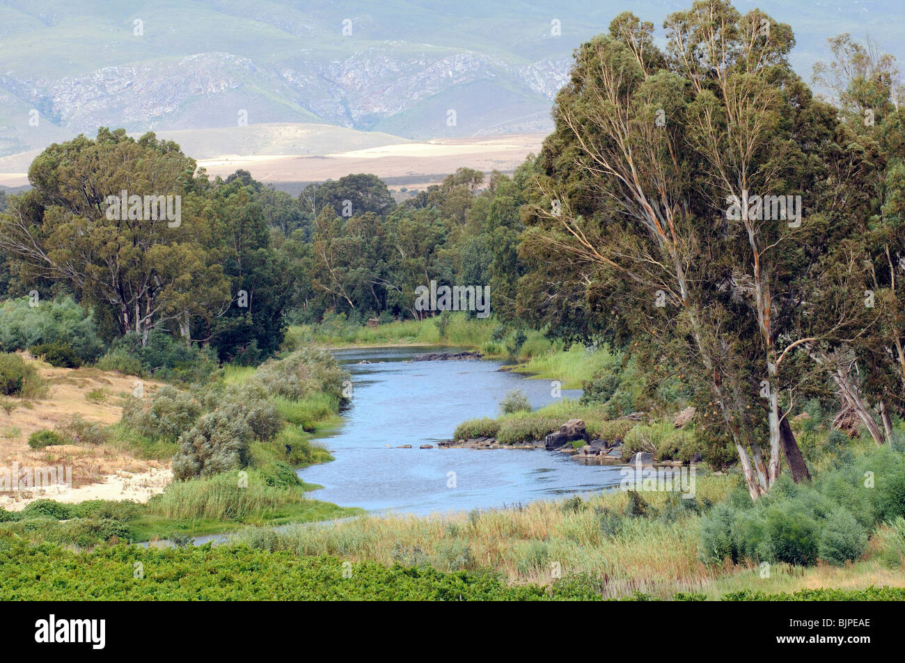 Breede River and the Riviersonderend Mountains a wine producing area near Robertson in the western Cape South Africa - Stock Image