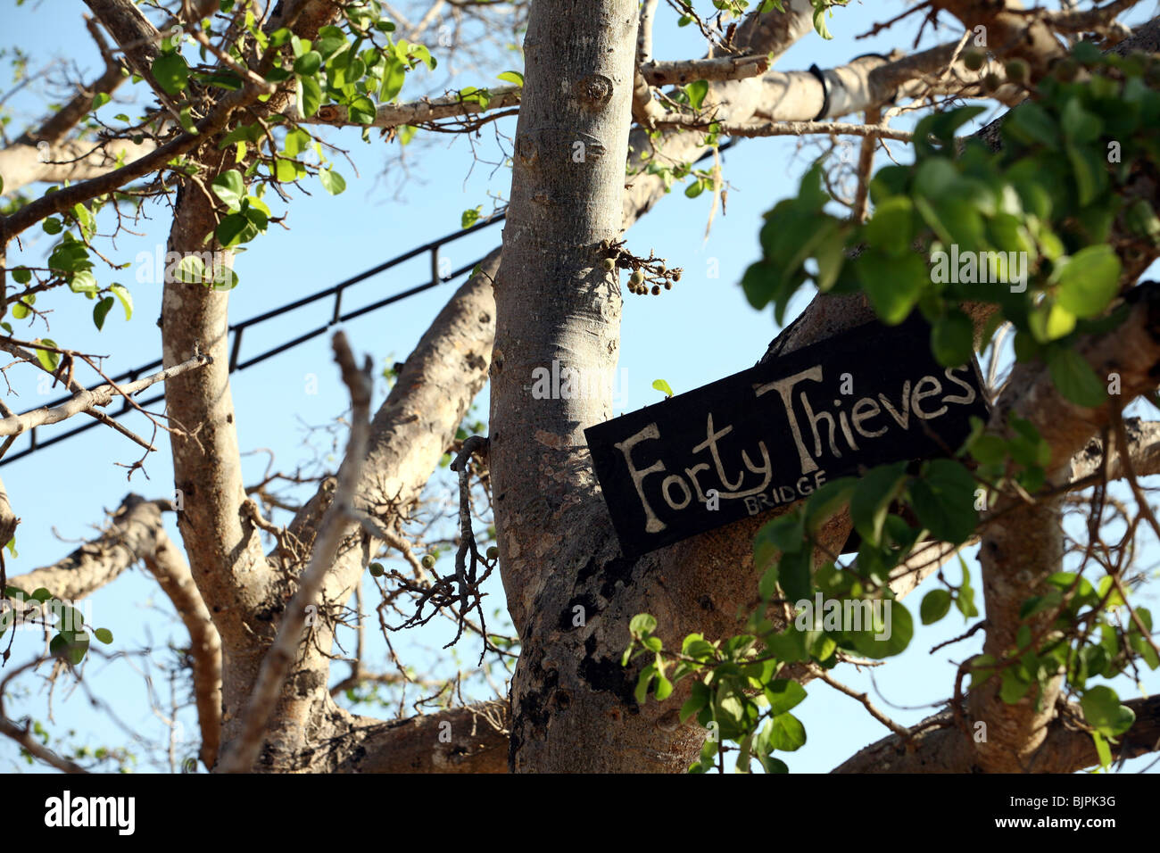 Ladders  across the road for the colobus monkeys Diani beach Kenya - Stock Image