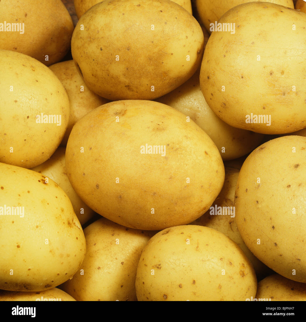 Tubers of Maris Piper potatoes ex shop or supermarket - Stock Image