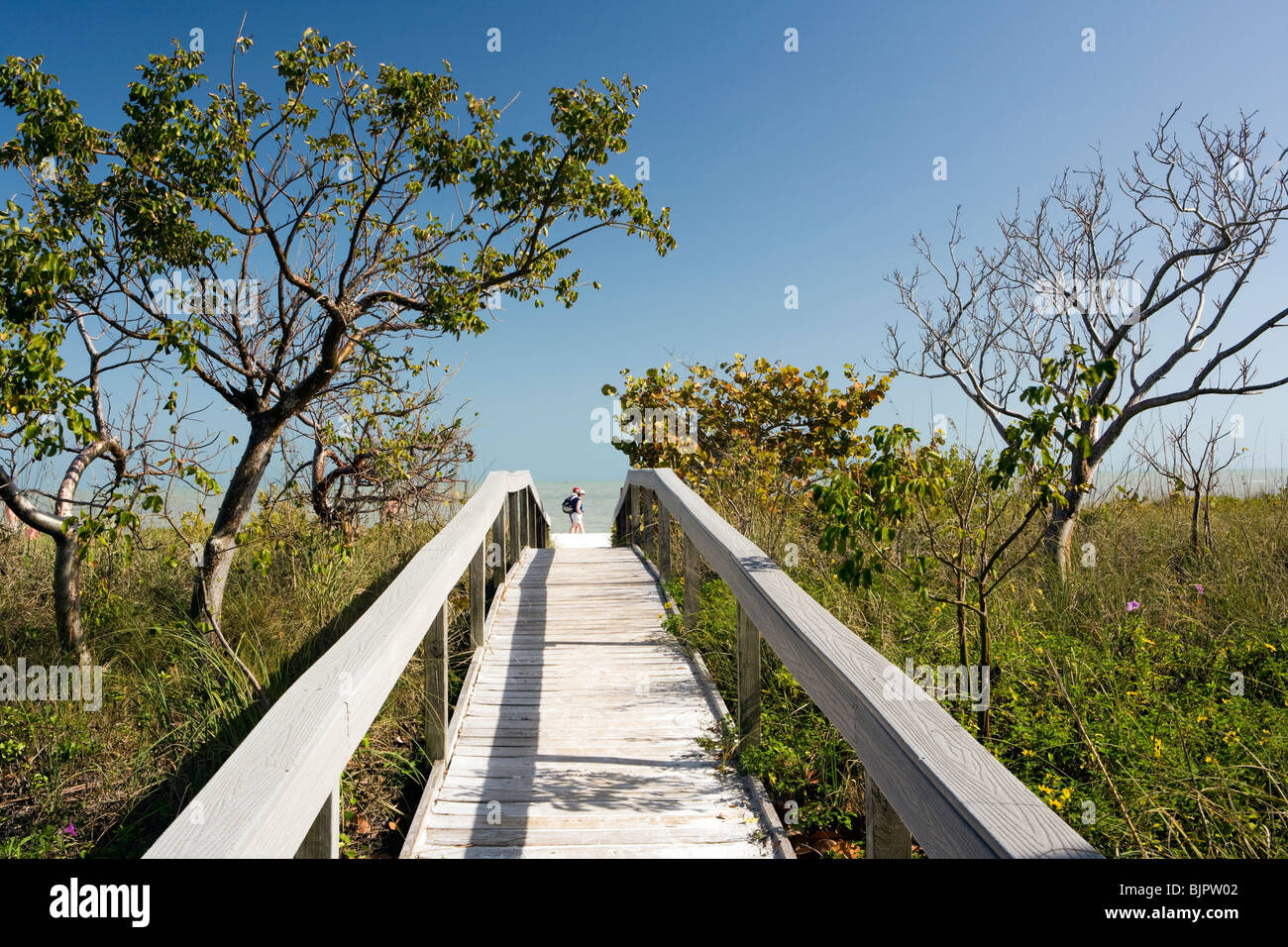 Boardwalk to Beach - Sanibel Island, Florida  USA Stock Photo