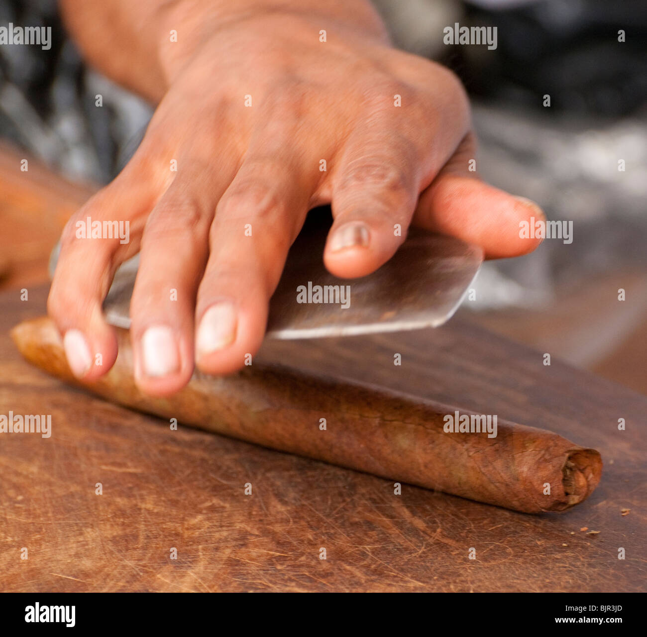 Mexico, Playa Del Carmen, Man rolling hand made premium cigar on Fifth Avenue at cigar store. - Stock Image