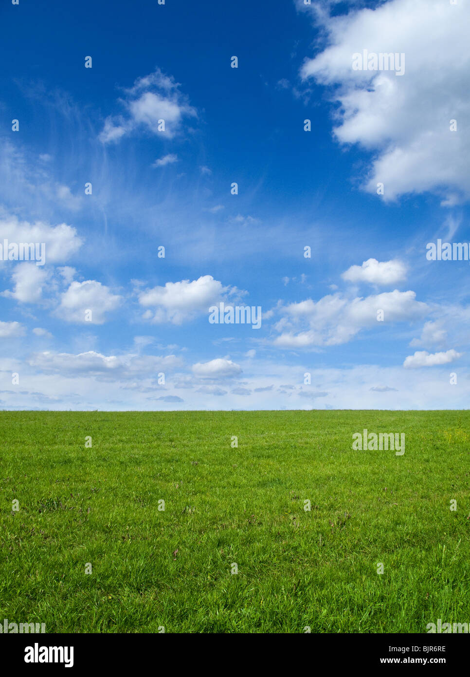 Landscape - Green field and blue sky - Stock Image