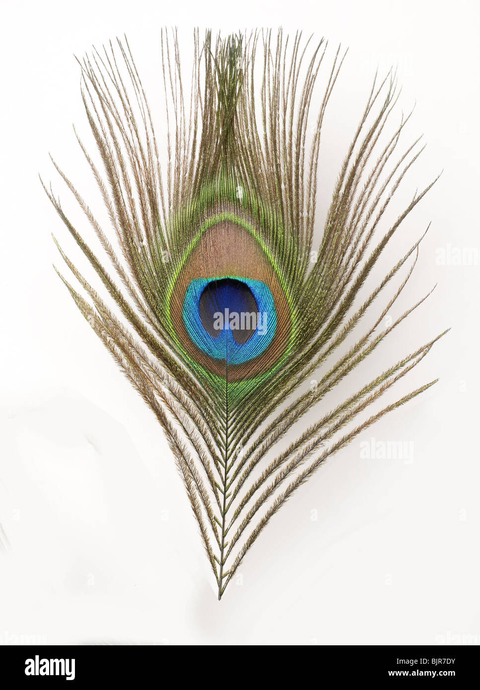 Close-up Feather Blue Green  Peacock Stock Photo